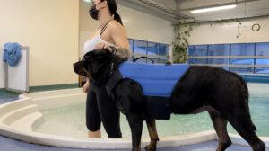 Miten opetimme vesikammoisen koiramme uimaan