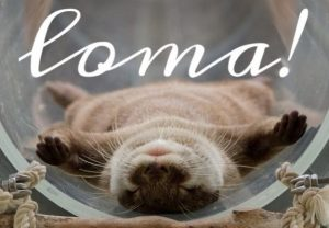 L.O.M.A mikä ihana tekosyy ottaa päikkäreitä