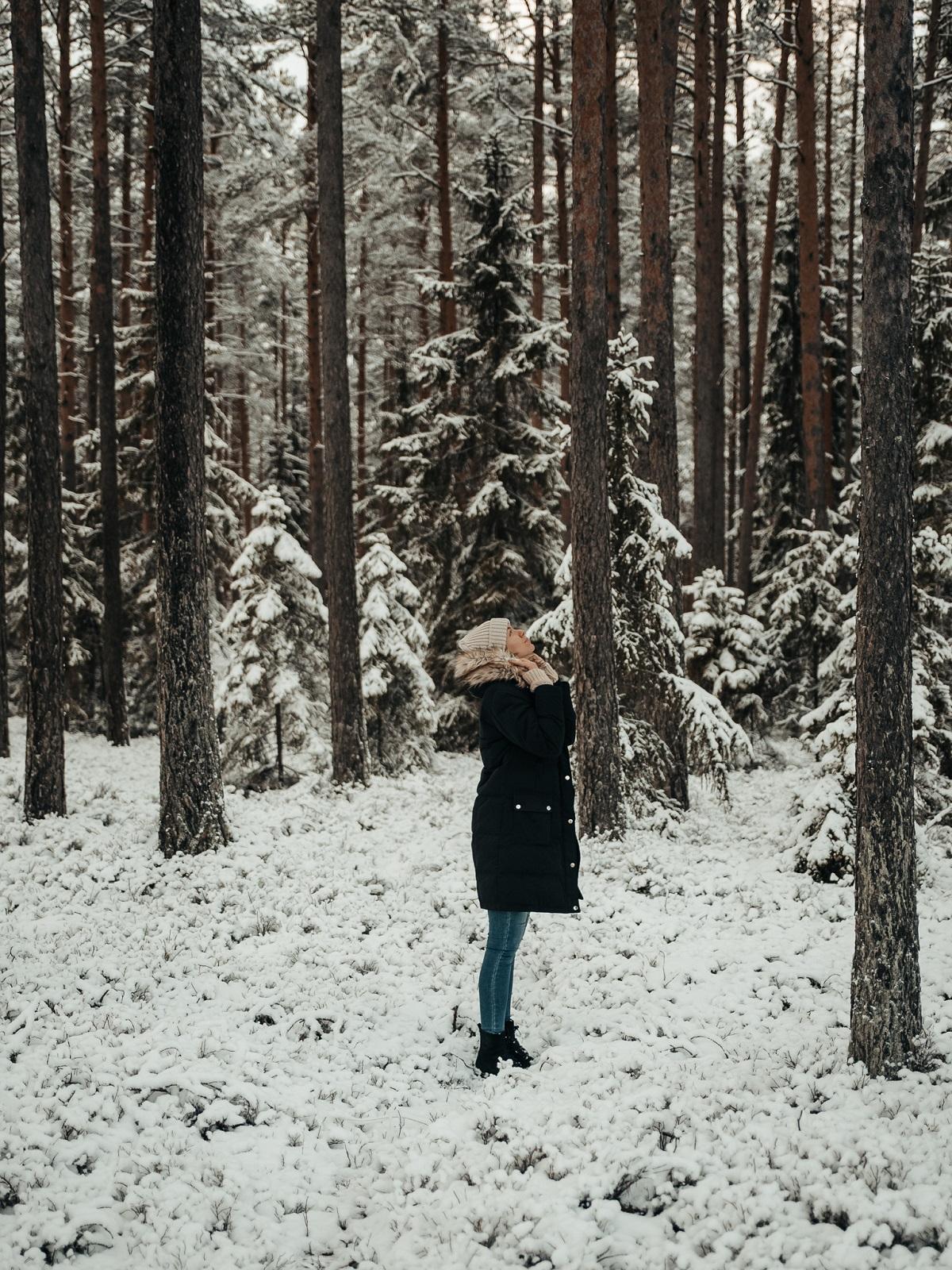 talvimetsä