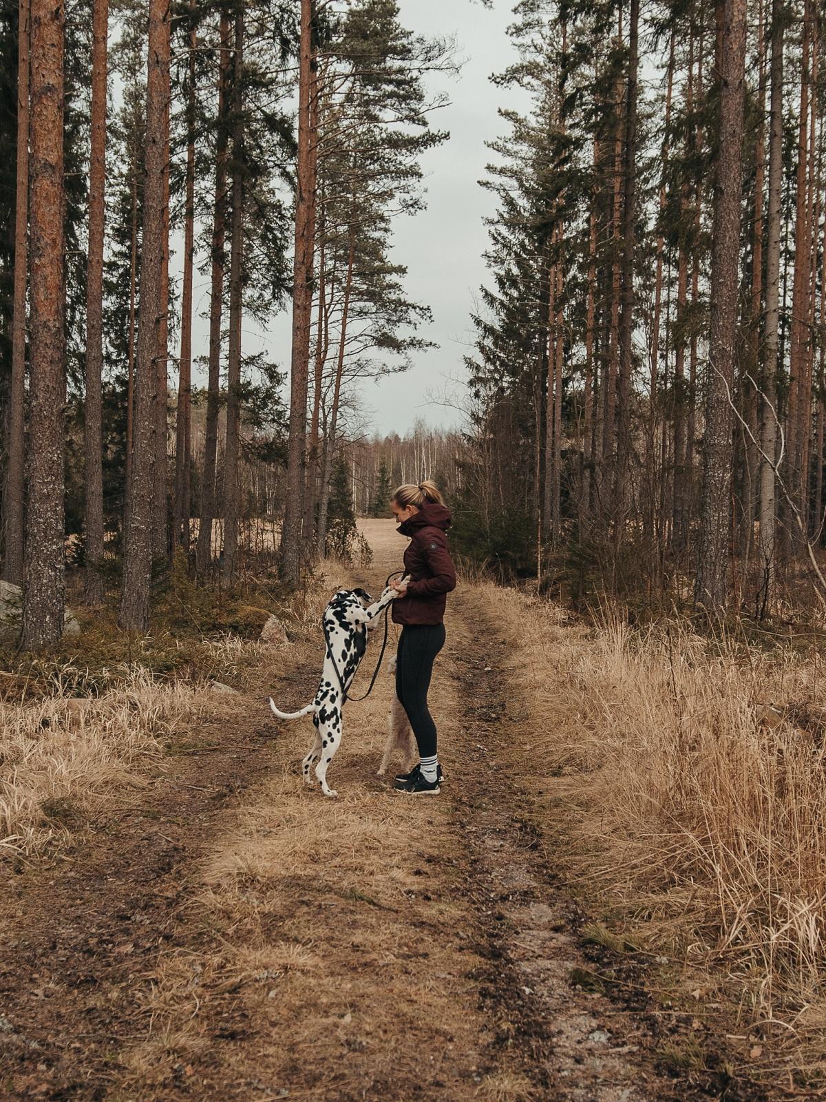 metsä_koirat