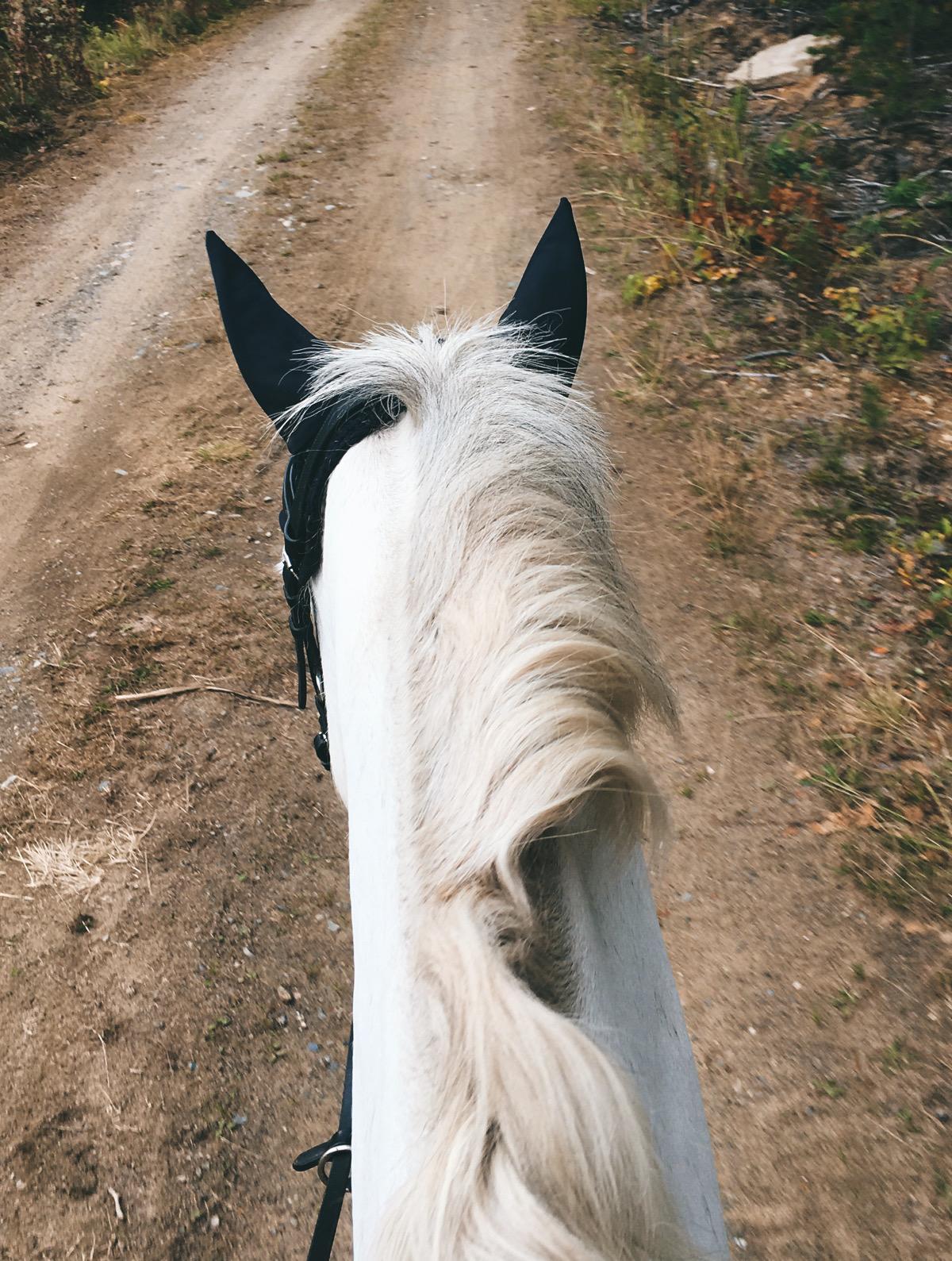 Kokemus ratsastajan core challengesta