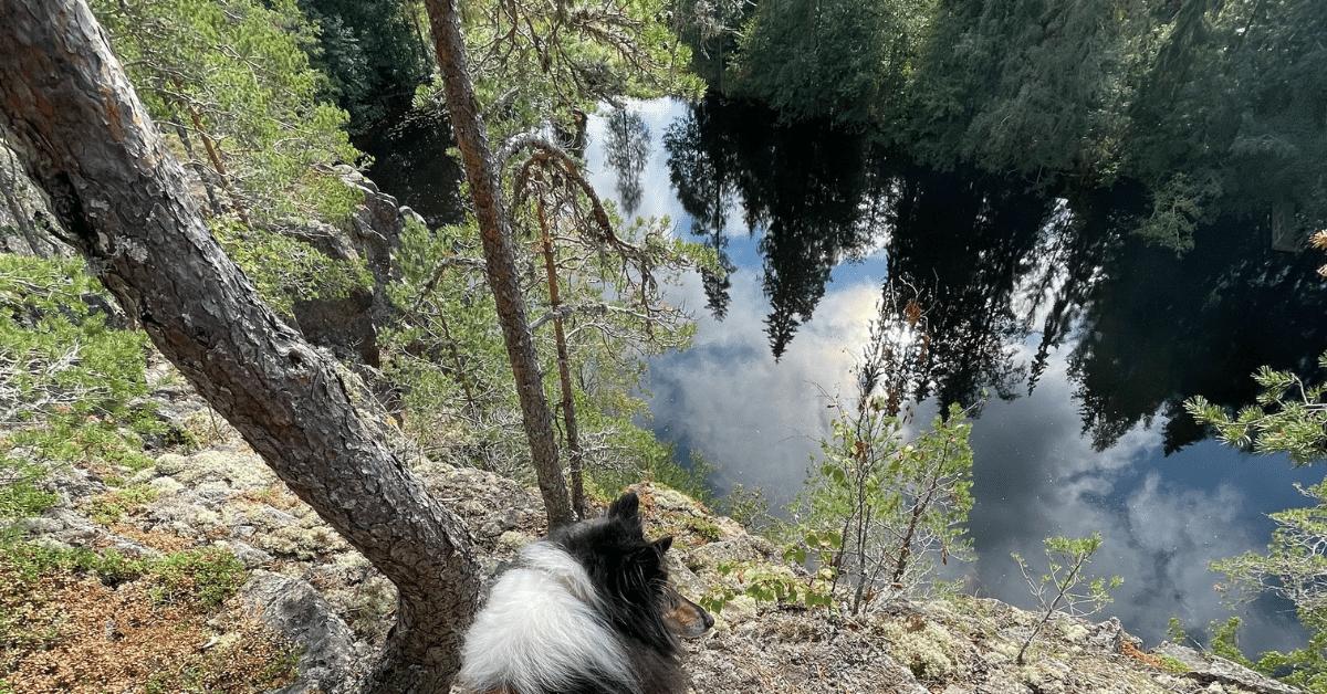 Read more about the article Mitä sä teit Suomen luonnon päivänä?